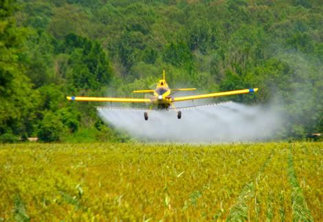 Flugzeug versprüht Pflanzenschutzmittel über Maisfeld