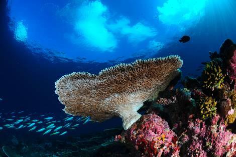 Koralle auf einem Korallenriff