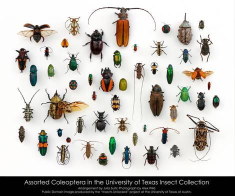 Insekten in Texas in ihrer ganzen Vielfalt