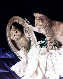 Eine kleine getigert-gemusterte Katze schaut sich im Spiegel an.