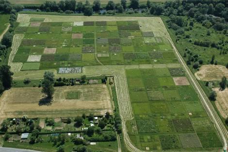 Luftbild verschiedener Pflanzentestfelder im Jena Experiment.