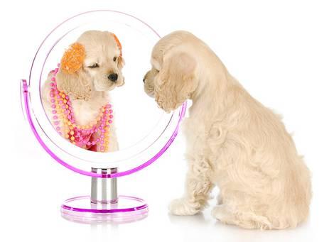 Ein Hund sieht sich selbst im Spiegel an.