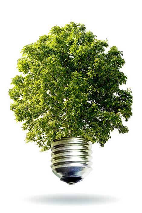 Glühbirne, deren Birne ein Baum ist