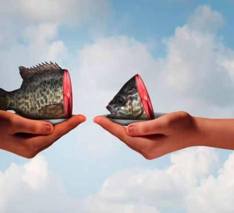 zwei Hände auf denen unterschiedlich große Fischstücke liegen.